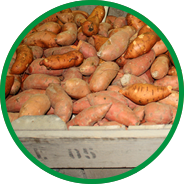cure sweet potato howell farming